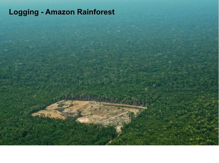 3E - Rain Forest Resources - JPEG