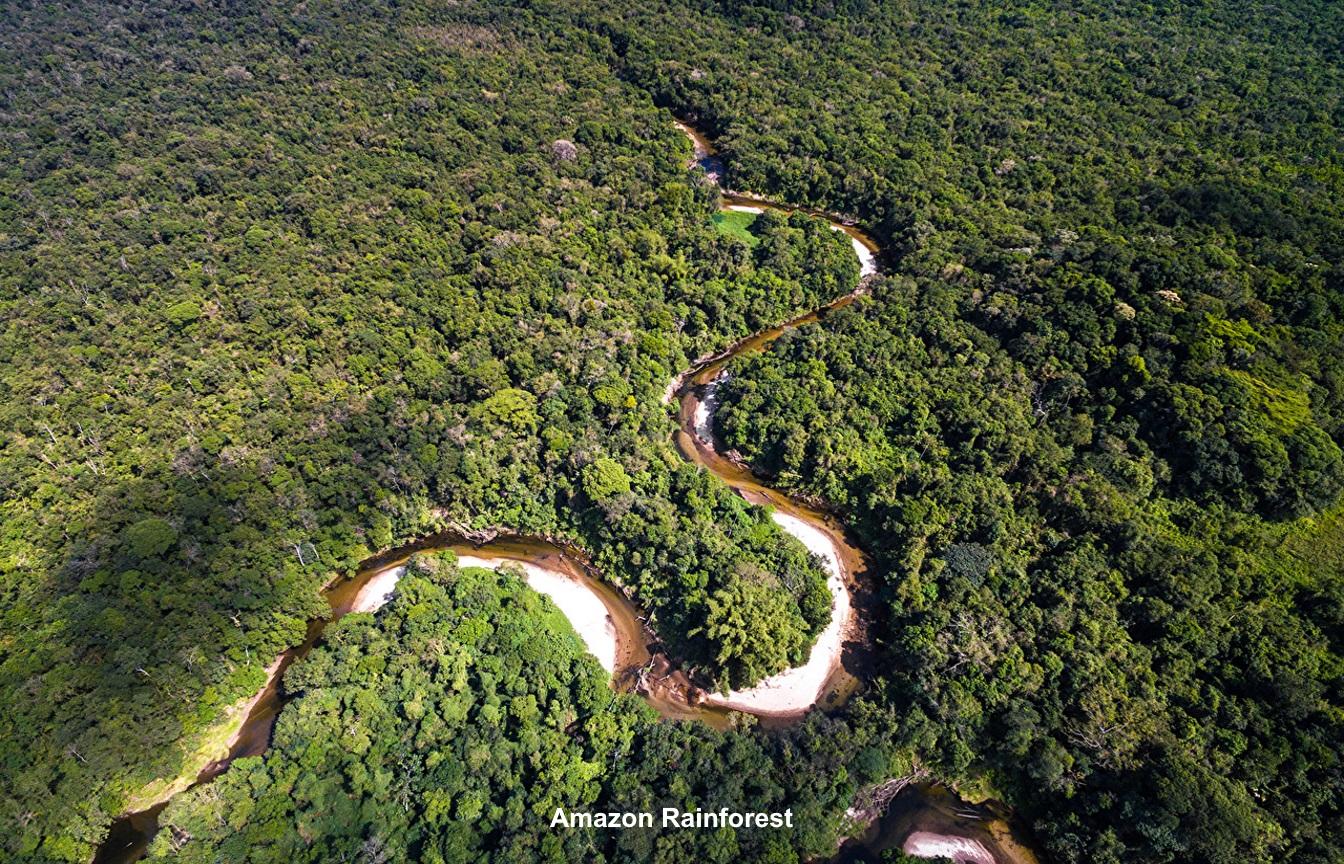 Amazon Jungle - JPEG