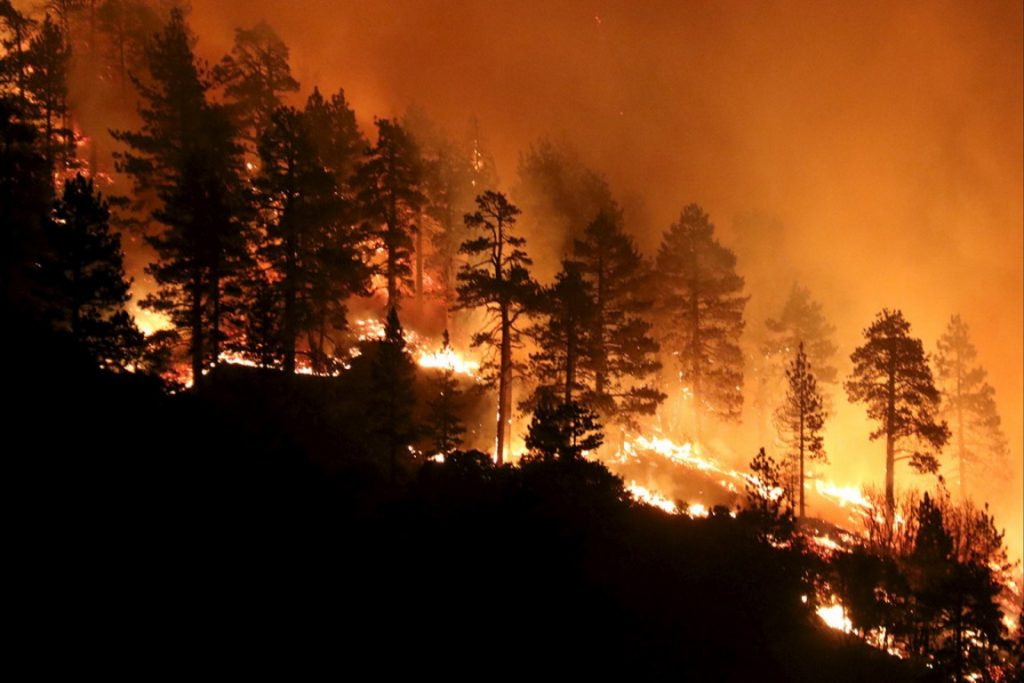 Forest Fire 11