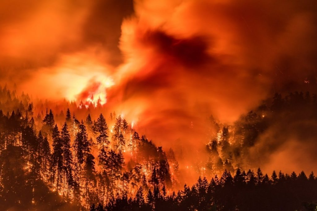 Forest Fire 13