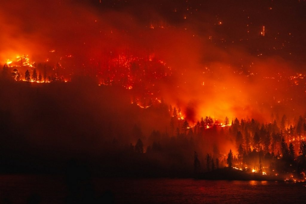 Forest Fire 14